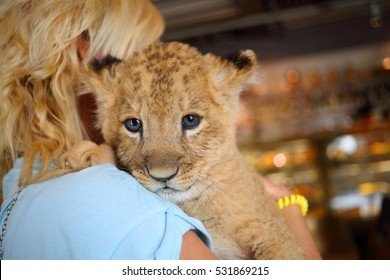 Blonde holds calf of lion on her shoulder, back view, close up