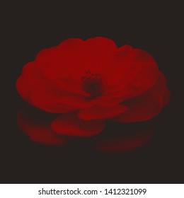 blood flowers red flowers dark
