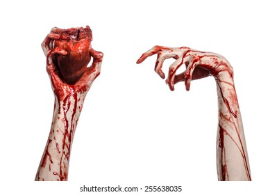 Blood and Halloween theme: terrible bloody hand hold torn bleeding human heart isolated on white background in studio