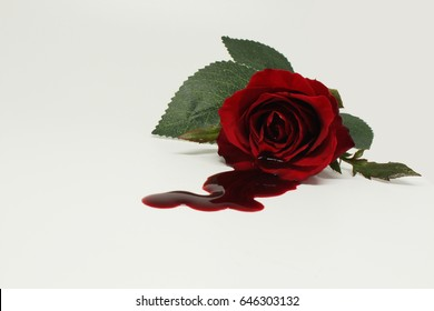 blood and rose on white background