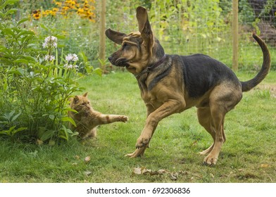 The Bloodhound and the cat
