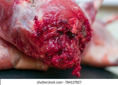 Bloody flesh of an animal. The gnawing of bloodied flesh.