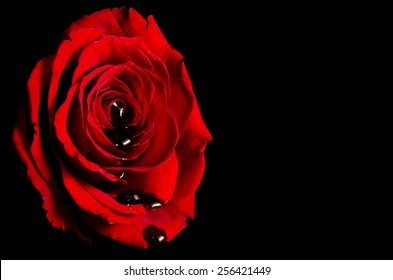 Blood Rose Images Stock Photos Vectors Shutterstock