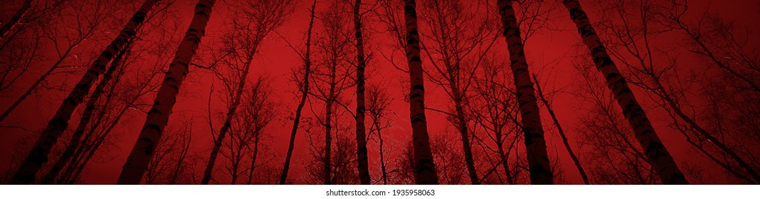 Bloody sunset in the forest. Silhouettes of trees on a red background. Horror mystic nightmare creepy fear concept. Paranormal supernatural surreal scene. Long web banner. Website header. Black Friday