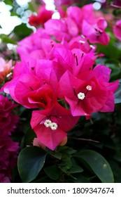 Bloom Pink Clolor Flower