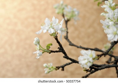 Blooming apple branch on the orange background