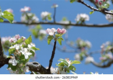 Blooming apple tree in spring. Closeup. Blurred background.