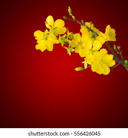 blooming apricot branch with delicate yellow flowers, isolated on dark red gradient