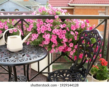Blooming beautiful pink Petunia flowers and white watering can stands on table. Metal forged furniture on balcony on sunny summer day. Flowers on balcony