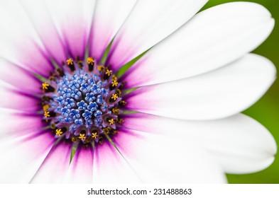 Blooming beautiful white flower.