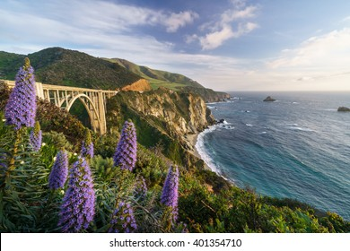 Blooming at Bixby Bridge