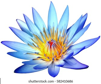 Blue lotus images stock photos vectors shutterstock blooming blue lotus flower isolated on white background mightylinksfo