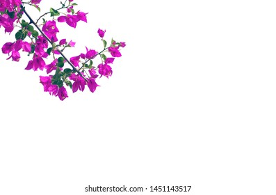 Blooming bougainvillea flower branch next to colorful background. Image is with copy space