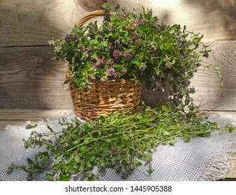 A blooming bouquet of wild thyme in a basket and on a napkin. Harvesting thyme herb. Medicinal herbs. Collecting herbs