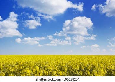 Blooming canola field under a blue sky with clouds.