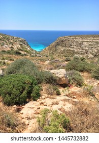 Blooming cardoon and thyme at Cala Galera in Lampedusa Island, Sicily, Italy as examples of flowers mediterranean scrub.