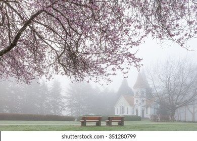 Blooming Cherry Trees and Church in Foggy Spring Morning
