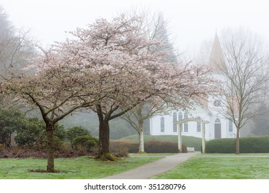 Blooming Cherry Trees in front of Church in Foggy Spring Morning