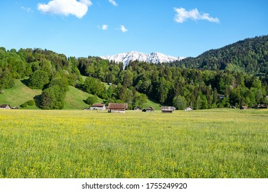 Blooming colorful flower meadow, forest, mountains and sky with clouds, Garmisch-Partenkirchen Bavaria Germany.