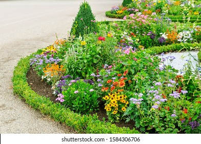 Blooming colorful summer flowers, flowerbed on a park.