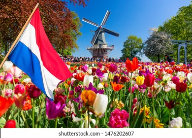 Blooming colorful tulips flowerbed in public flower garden with windmill and waving netherlands flag on the foreground. Popular tourist site. Lisse, Holland, Netherlands.