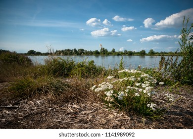 Blooming cow parsley along the banks of a flowing river. Dutch Delta landscape with blue sky and white clouds over a river landscape