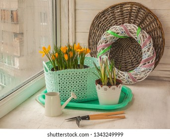 Blooming crocuses on the window and decorative watering can