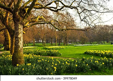 Blooming daffodils in St James's Park in London