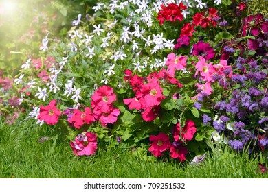 lot of blooming different flowers and plants in a garden
