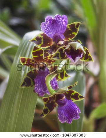 Blooming Exotic Orchids Stock Photo Edit Now 1047887383 Shutterstock