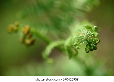 Blooming fern - may 2016
