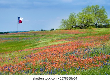 Blooming field of Texas bluebonnet and Indian Paintbrush wildflowers in the spring. Texas flag waving in the wind against blue sky in the background.