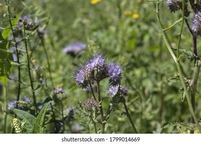 blooming flower in the meadow full of flowers