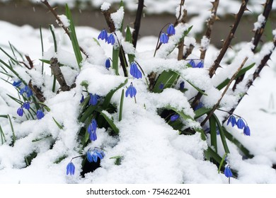 Blooming flowers covered in white snow out at winter