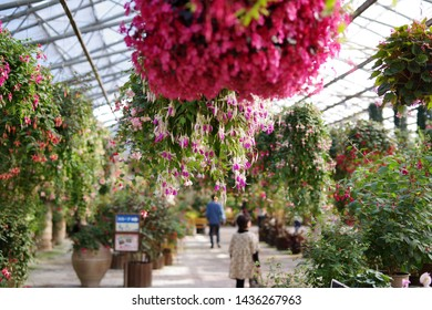 Blooming flowers grown in the greenhouse of the botanical garden
