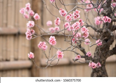 Blooming flowers in japanese garden