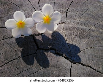 the blooming Flowers on the wooden backgrounds