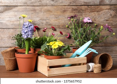 Blooming flowers in pots and gardening equipment on table