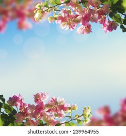 Blooming flowers and spring bokeh light background