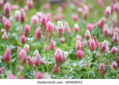Blooming flowers in spring - may 2016