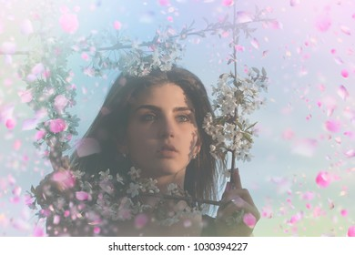 Blooming flowers tree. Sacura tree blooming
