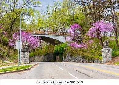 Blooming Flowers and Trees on Pedestrian Bridge in Spring in Cincinnati, USA