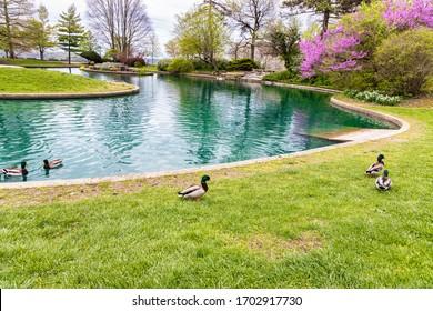 Blooming Flowers and Trees in Spring in Eden Park, Cincinnati, USA