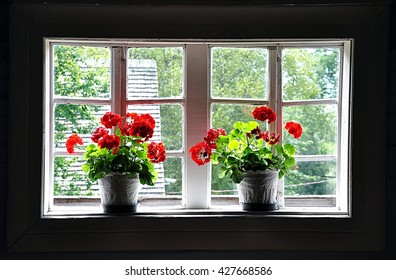 with blooming flowers in the window