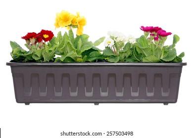 Blooming flowers in window box.