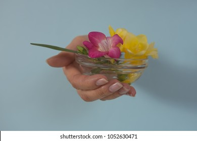 Blooming fressia in the palm of woman on blue background