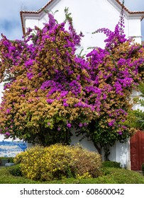 Blooming garden and a beautiful villa on the coast in Portugal