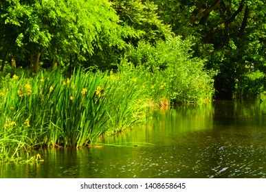 blooming of grass in the summer reflected in the channel in the vondelpark