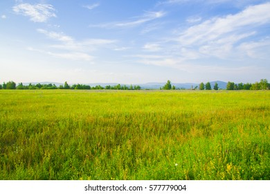 Blooming, green meadow with lush grass. Early spring.