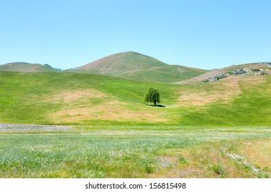 Blooming hills near Caliente, California.